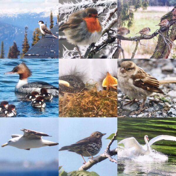 fotos-kalender-vogels